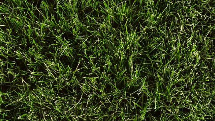 What type of Grass Do I Have? - Grass Identification - Roundup