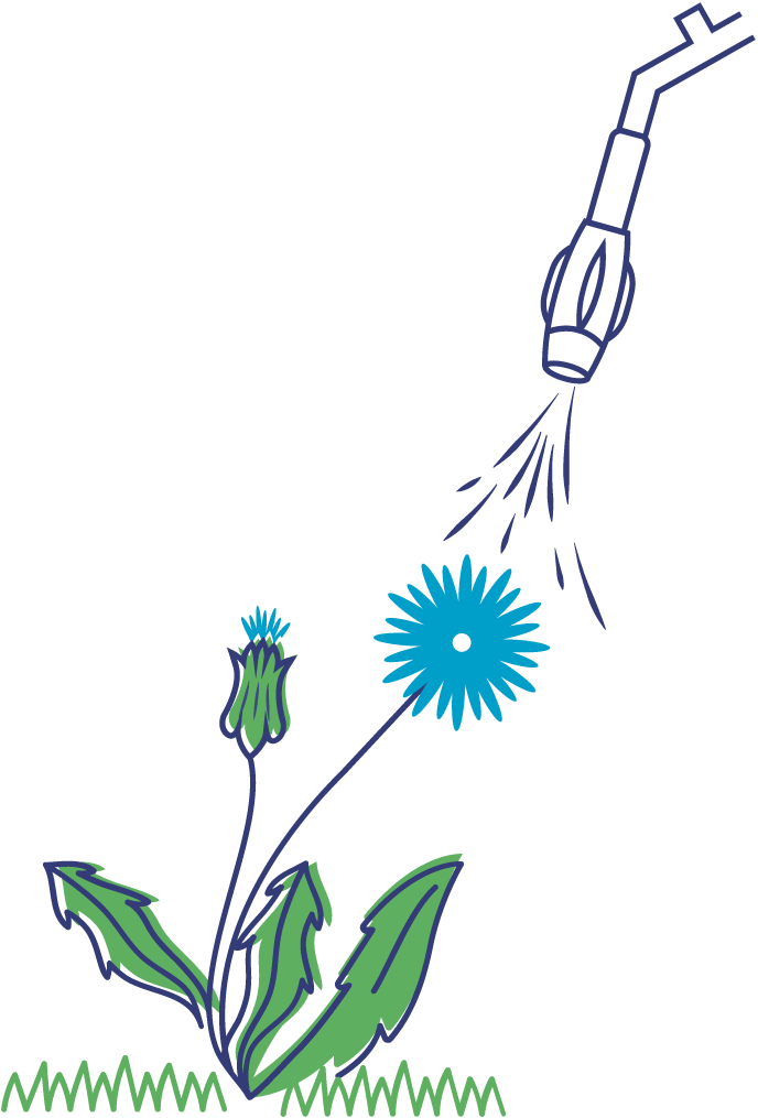 illustration dandelion plant