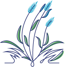 Orchardgrass Illustration