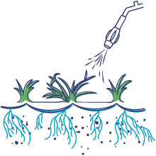 Sure Shot Spraying Grass Rhizomes Illustration