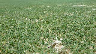 What Do Roundup® Weed & Grass Killer Products Control