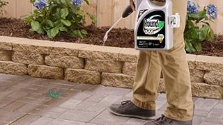 Man spraying weed killer on weeds in a garden.