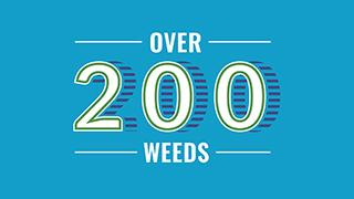 How many weeds: Over 200