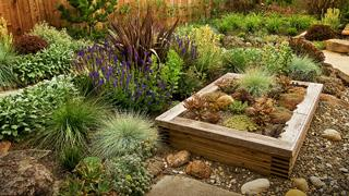 Raised Bed by Shrubs