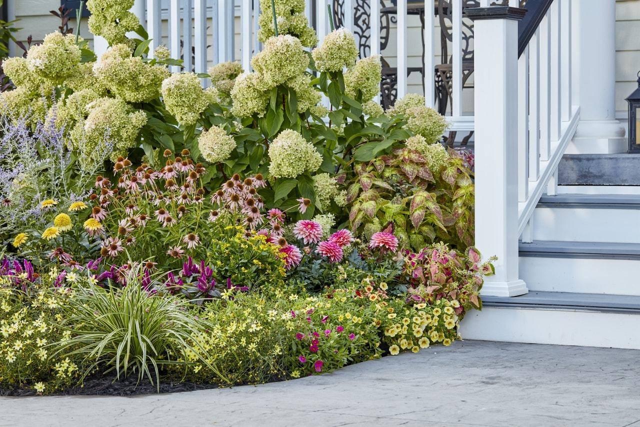 Landscape garden by front porch and steps, filled with colorful perennials.