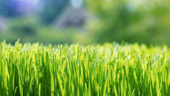 Can I Treat Weeds with Roundup® For Lawns Products When It's About to Rain?