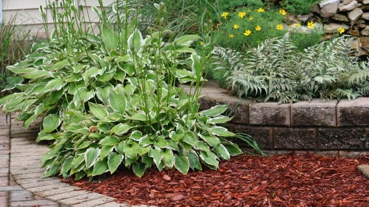 Mulched Landscape Bed