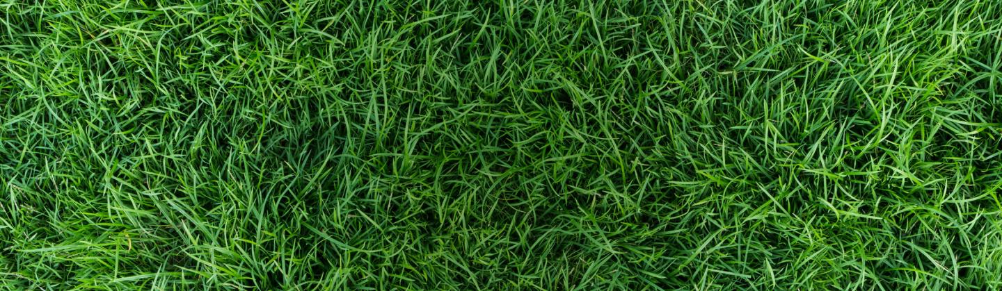 roundup for lawns category header