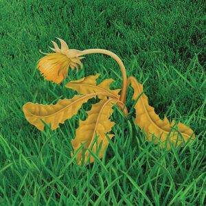 Kills the Toughest Weeds Down to the Root
