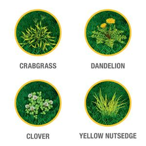 Kills Over 250 Listed Weeds