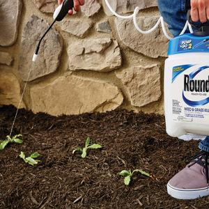 Why You Never Found How To Kill Weeds to Be Interesting