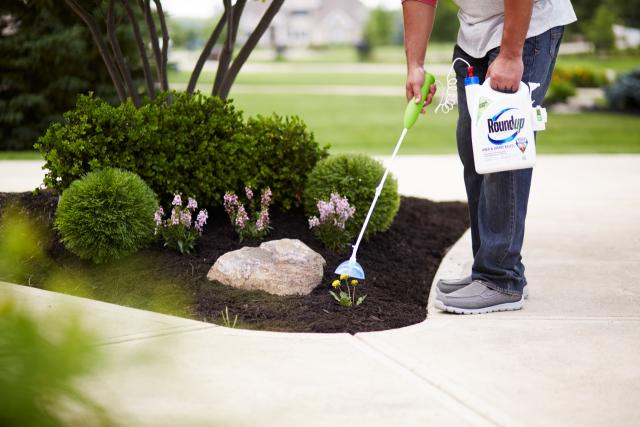 Man using Roundup Ready-to-Use Weed & Grass Killer III with Sure Shot® Wand in his garden