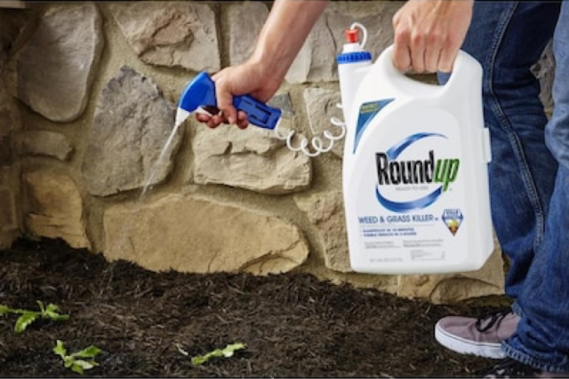 Roundup® Ready-To-Use Weed & Grass Killer III Trigger In Use