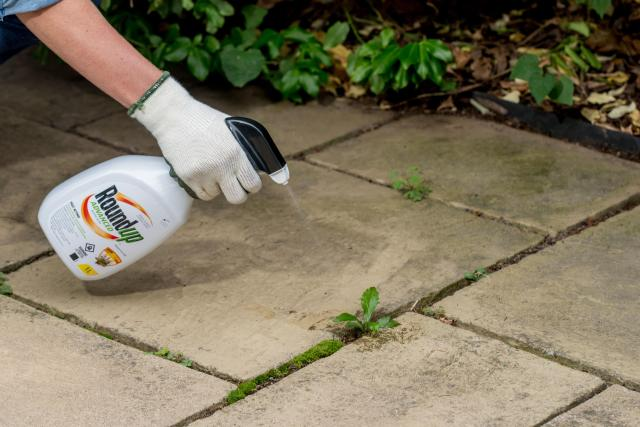 Consumer spraying weeds on concrete patio with product